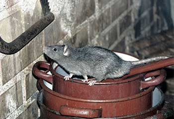 Rodent Proofing | Attic Cleaning Hayward, CA