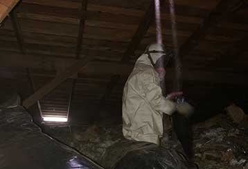 Attic Cleaning in Hayward | Attic Cleaning Hayward